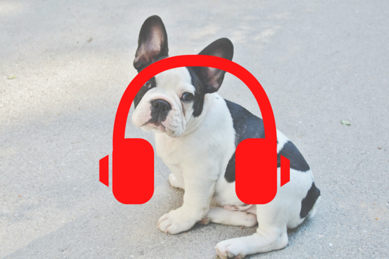 Bouledogue francese Podcast